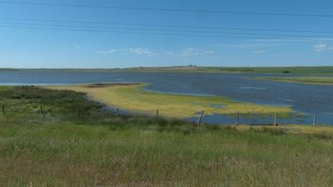 Gelbgrün blüht der Teich